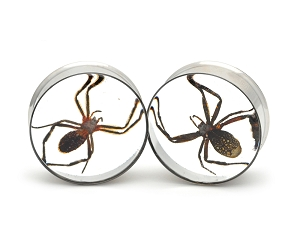 Embedded Orb Weaver Spider Resin Plugs