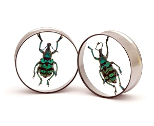 Embedded Blue and Green Weevil Resin Plugs