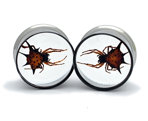Embedded Spiny Spider Resin Plugs