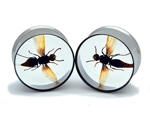 Embedded Wasp Resin Plugs