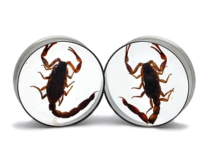 Embedded Scorpion Resin Plugs
