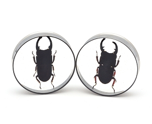 Embedded Black Stag Beetle Resin Plugs