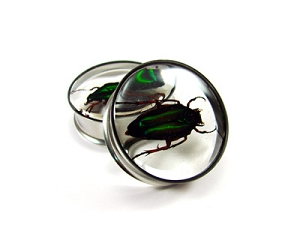 Embedded Green Scarab Beetle Resin Plugs