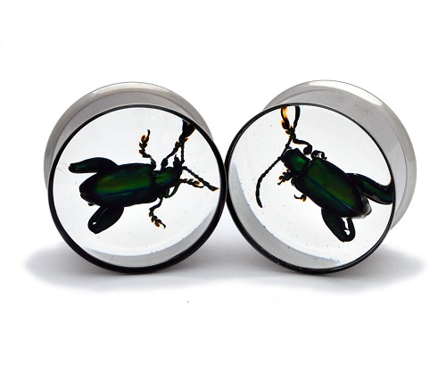 Embedded Green Leaf Beetle Resin Plugs